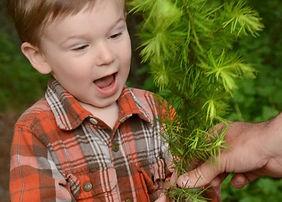 Wes_free trees ad.jpg