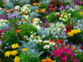 flower, garden, colorful