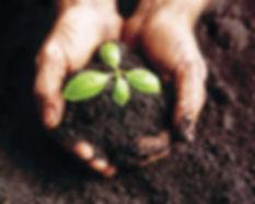hands_in_compost.jpg