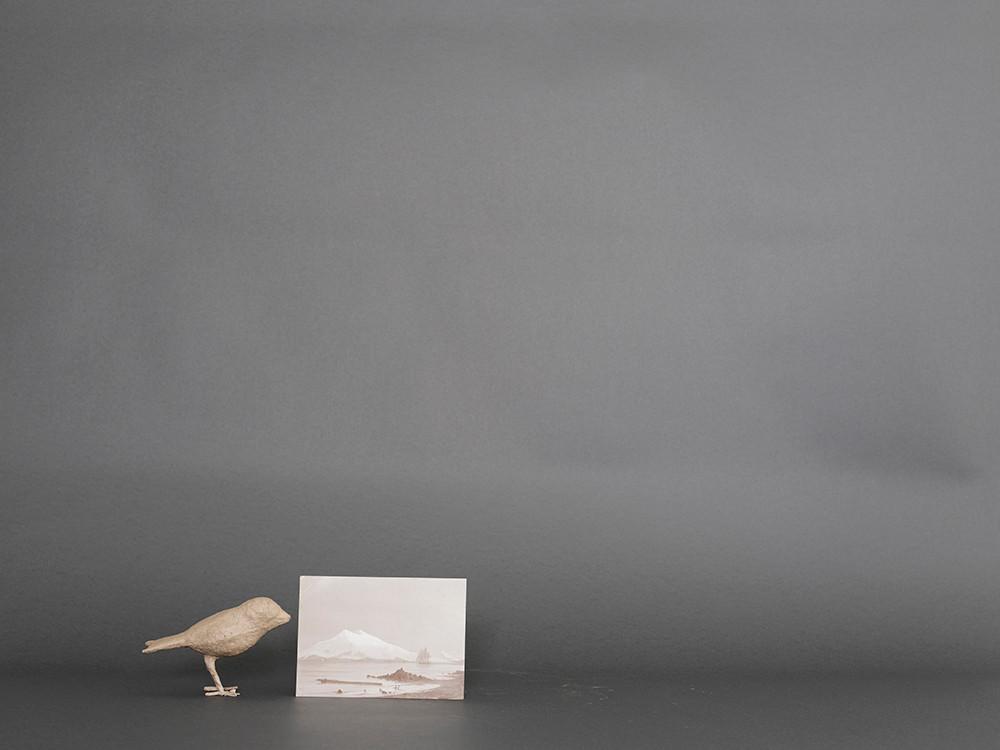 Bird/Landscape