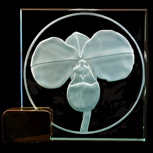 "Phragmipedium kovachii 4"" x 4"" Award"