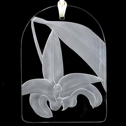 Bulbophyllum Suncatcher