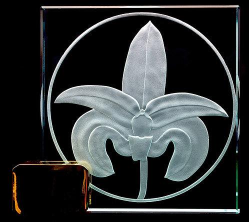 """Bulbophyllum 4"""" x 4"""" Award"""