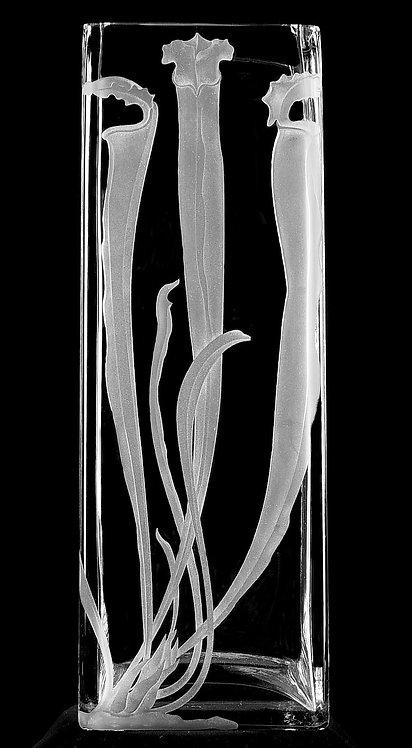 Sarracenia alata Vase.jpg