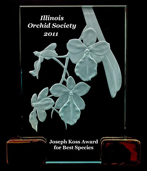 Aerangis luteo-alba Award