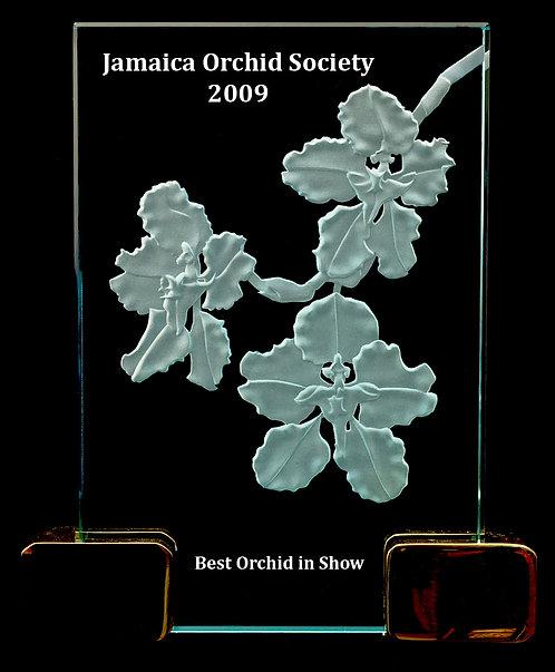 Cyrtochilum (Oncidium) macranthum Award