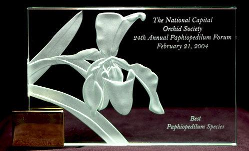 Paphiopedilum gratrixianum Award
