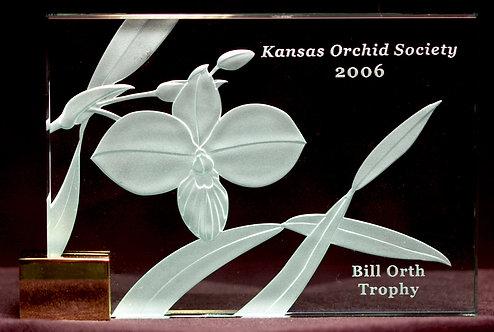 Phragmipedium besseae Award