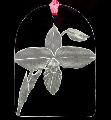 Phragmipedium besseae Suncatcher