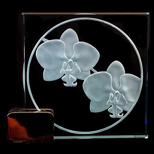 "Phalaenopsis 4"" x 4"" Award"