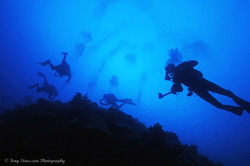 Gathering of Divers