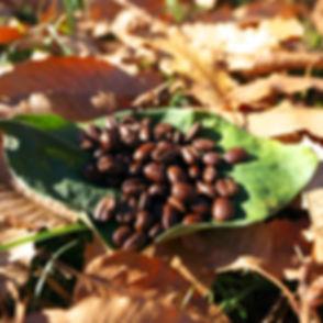 ウミアック・珈琲豆
