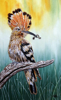The Visiting Hoopoe