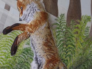 Second Fox Cub