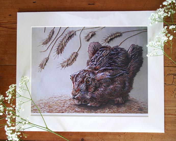 Starled Hare