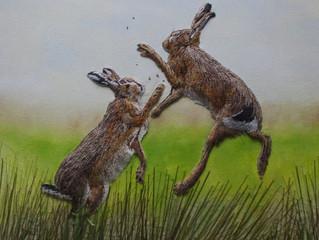 The Rare Moorland Hare