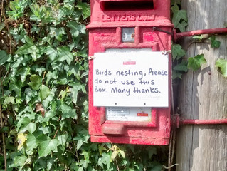 Birds Nested In Post Box!