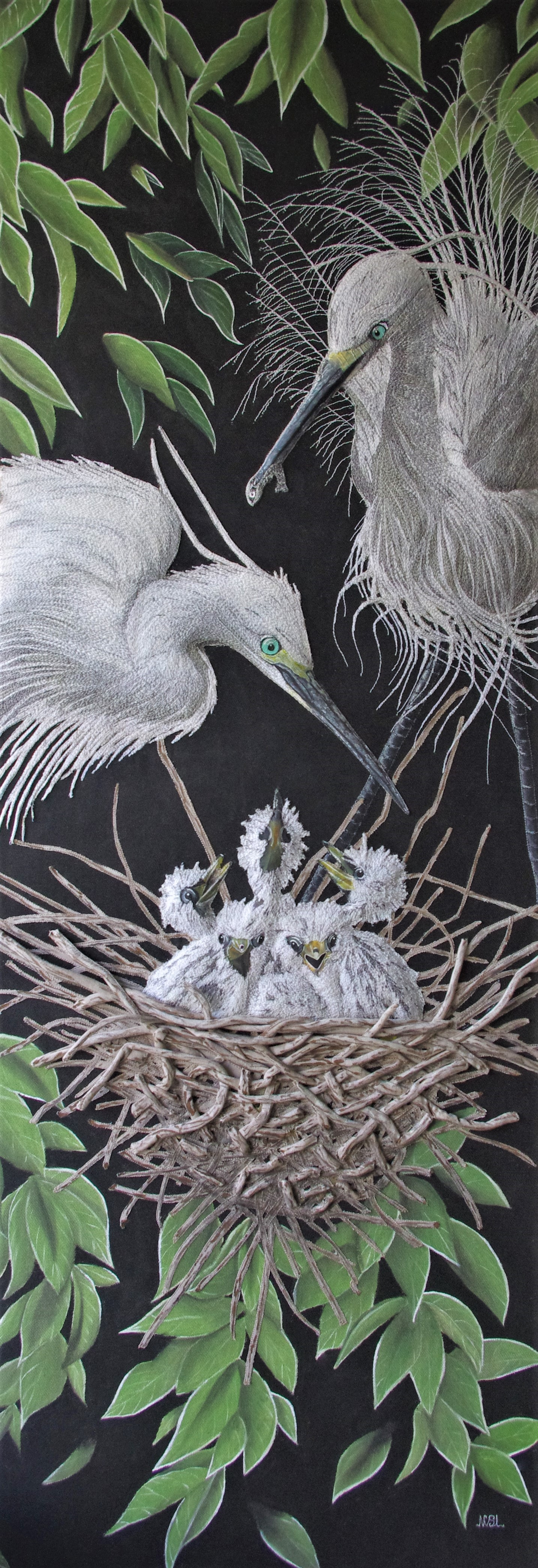 Hungry Little Egrets SOLD