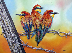 Beautiful Bee-eater