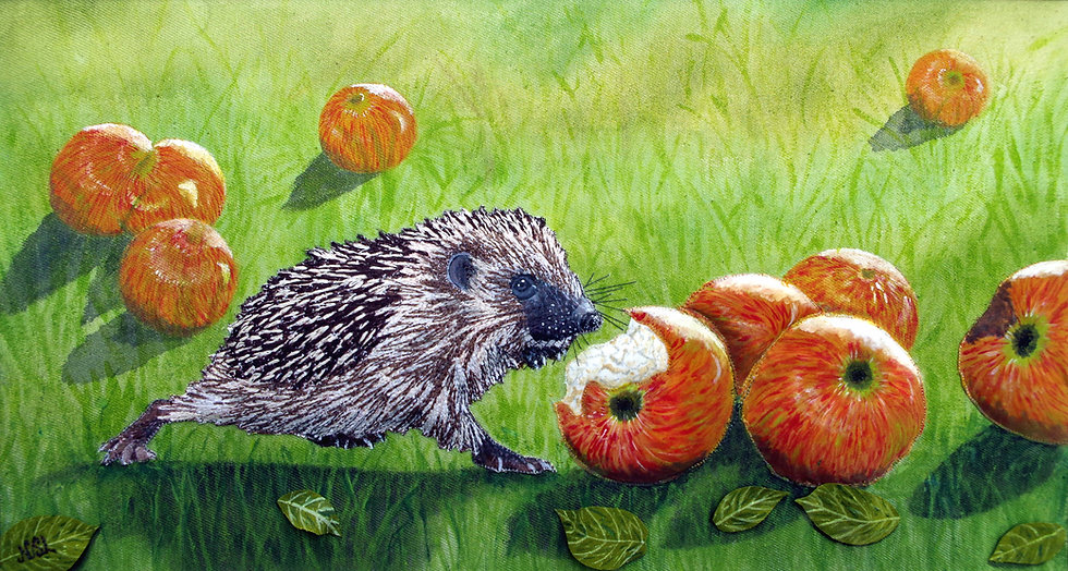 Hedgehog's Windfall