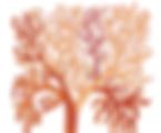 Gond Tree