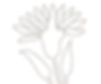 Ajanta Flower