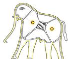 Pithora Elephant