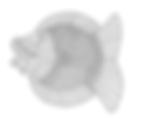 Shadow Puppet Fish