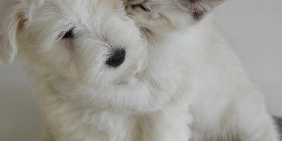 Pet Adoption Day