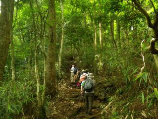 森林セラピールートをめぐる古道歩きツアー