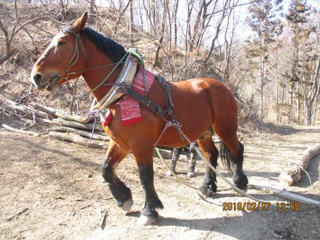 馬搬材トレーサビリティ