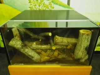 森林学習展示館の展示へ