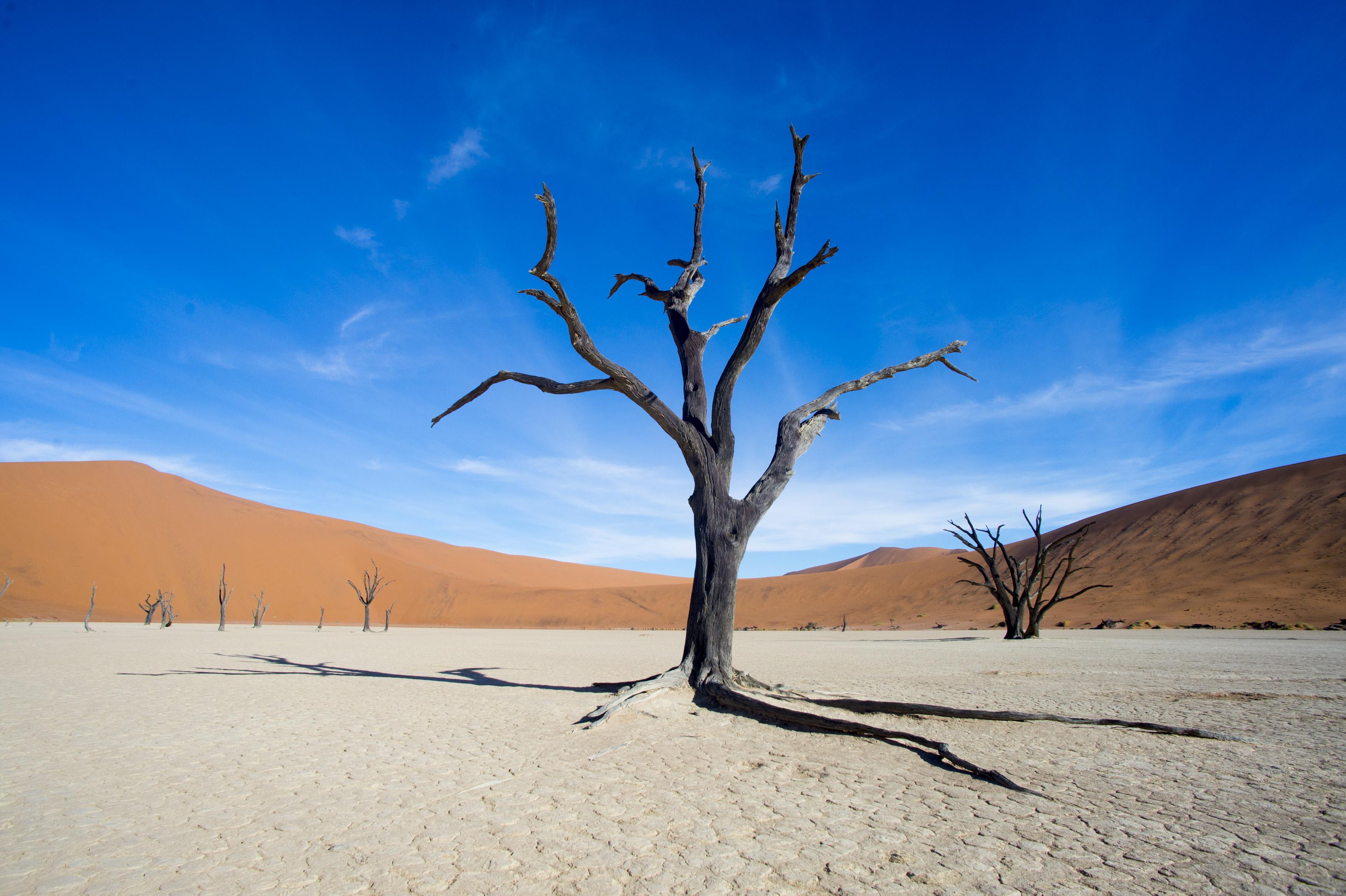 Trees Namibia