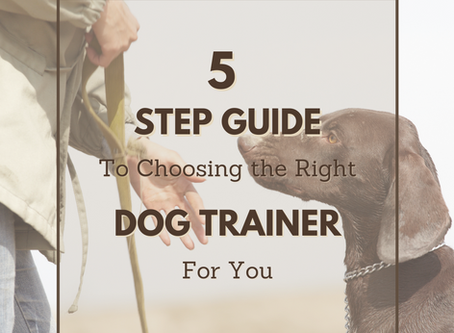 5 Step Guide to Choosing the Best Dog Trainer for You