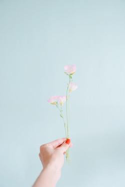 Hiruzaki Tsukimisou, Flower