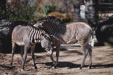 Zoo Care .jpg