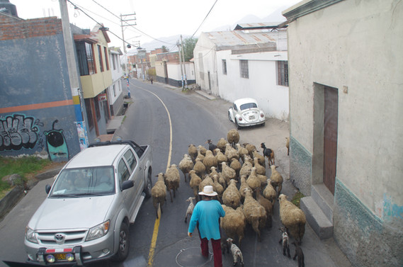 SheepRoad.JPG