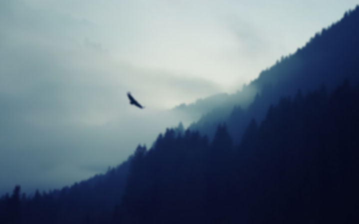 3840x2400_px_artwork_eagle_forest_mist_m