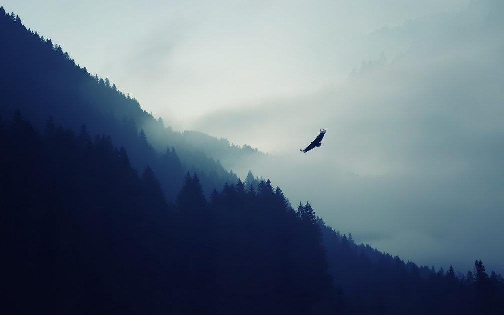 artwork_forest_mountains_mist_eagle-2095