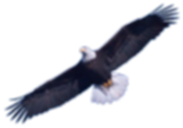 Download-Bald-Eagle-PNG-Image-026.png