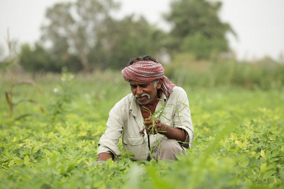 A farmer tends to their garden.