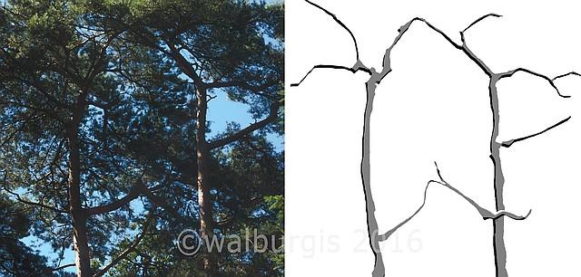 van foto naar digitale tekening - bos impressie ©walburgis 2016