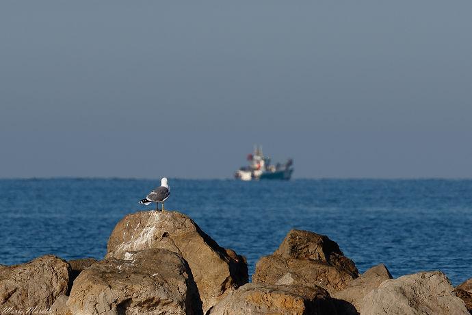 Méditerranée        2021