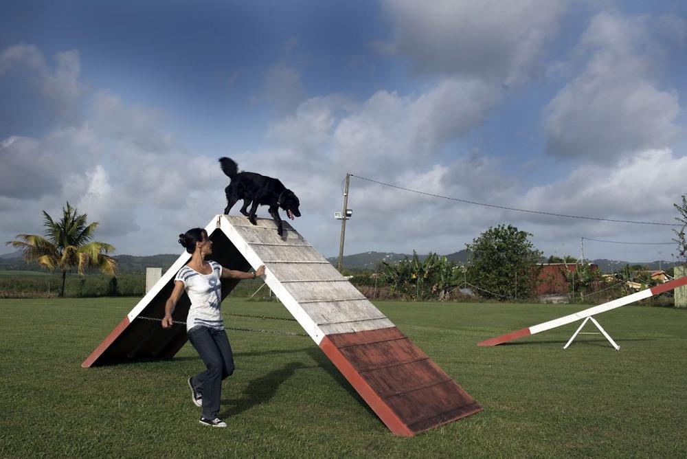 Z'animos Martinique - Franchissement de la palissage avec Spark