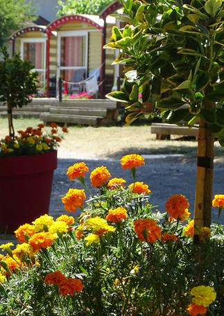 fleurs du camping