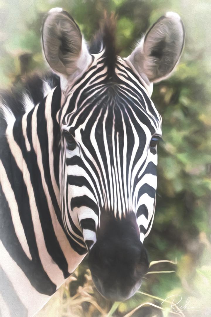 Tanzania-364-richberrett