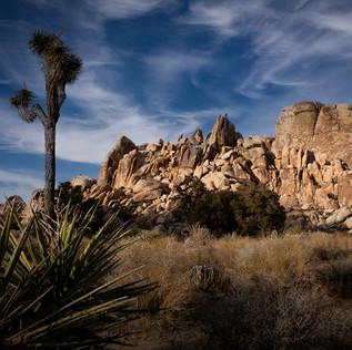 508--National Parks--Joshua Tree--Januar