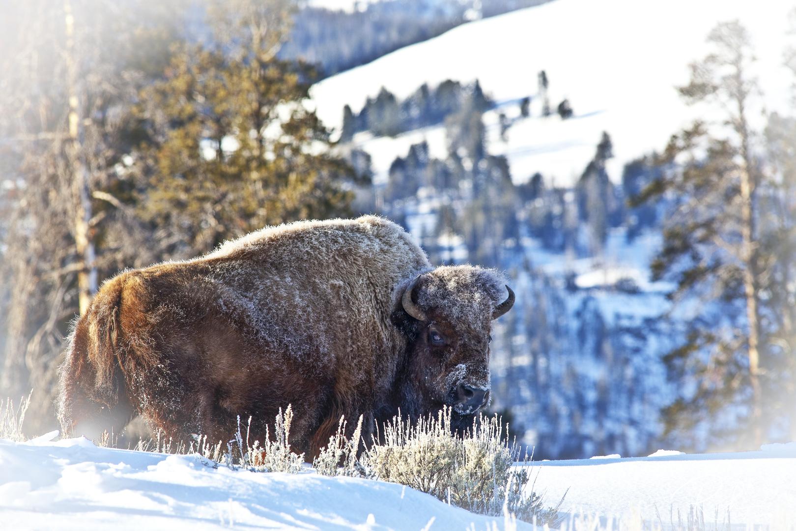 Yellowstone-42-RichBerrett-2