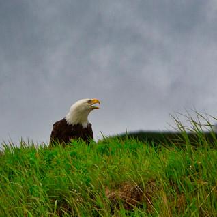 Alaska 2012-102-RichBerrett_Luminar4-edi