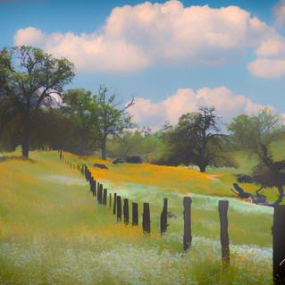Sierra Foothill Spring